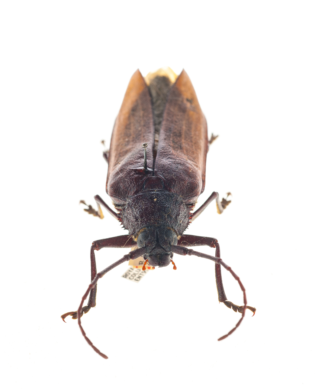 entomology relatives insects Entomology is the study of insects and the relationship that they have with the  environment, humans and other organisms the research done by entomologists.