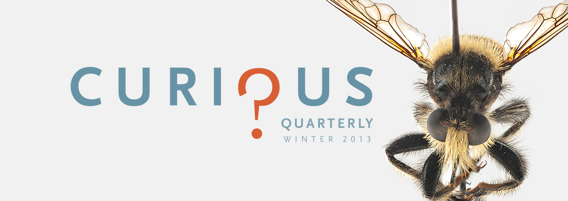 Curious Quarterly