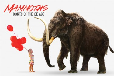 FINAL_Mammoth_Public_Website_Images
