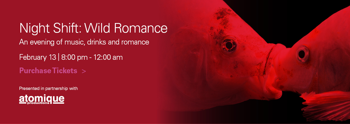 FINAL_Night_Shift_Wild_Romance_Homepage_Slider