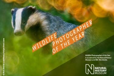 WPY-Badger