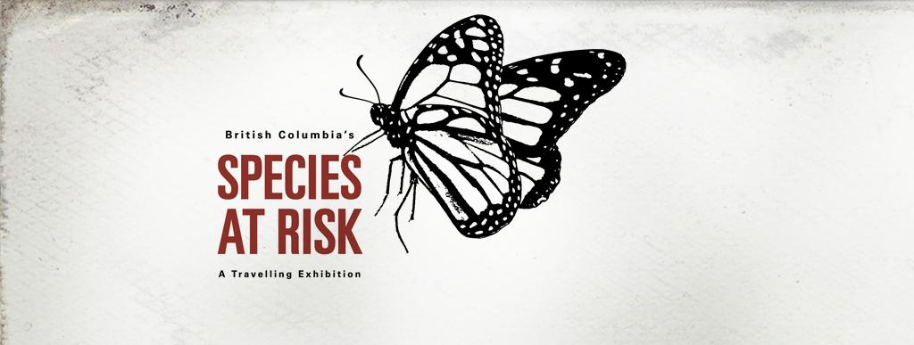 species-at-risk-banner