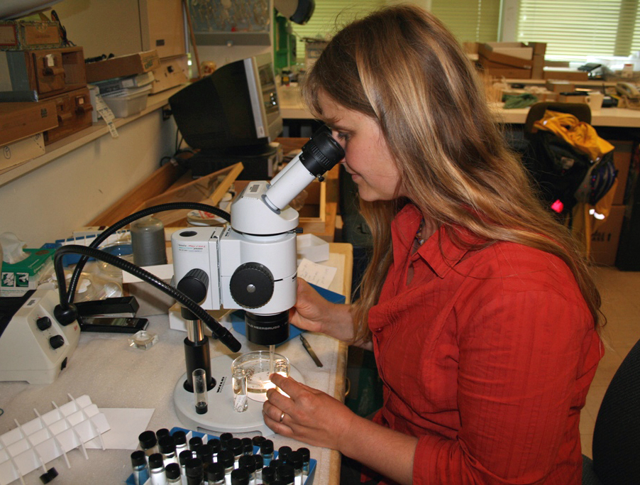 Figure 10. Claudia Copley. RBCM Entomology Collections Manager, 2004-present.