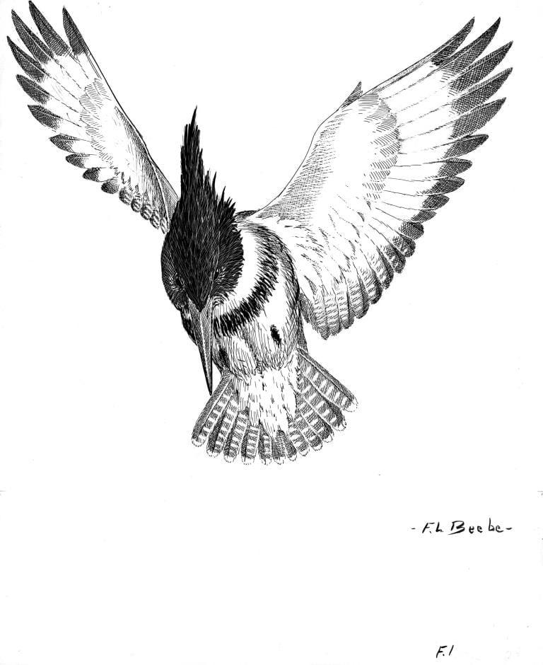 British Museum Natural History Ornithology